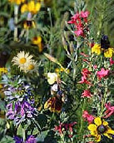 Wildflowers for Seed Favors